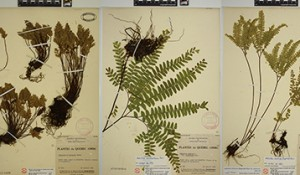 L'Herbier et son Double / The Herbarium and its Double – en cours / ongoing